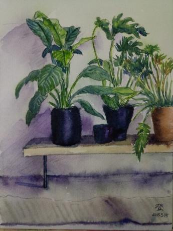 室内盆栽2