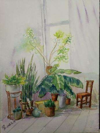 室内盆栽1