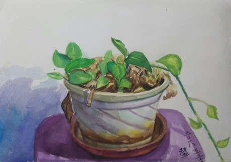绿萝植物写生