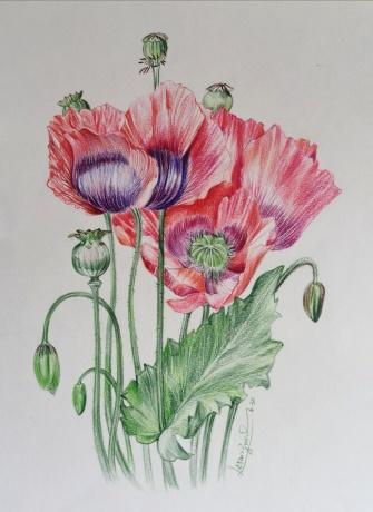 【紫陌之花】
